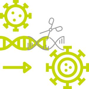 gentoxische Wirkung auf die DNA führt zu Tumoren
