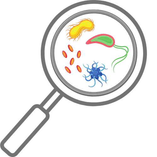 Mikrobielle Kontamination im Reinraum