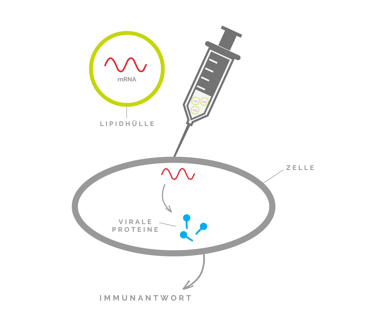 mRNA Impfung Wirkungsweise